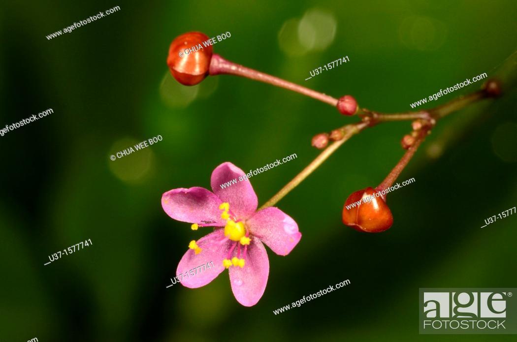 Stock Photo: Garden flower.