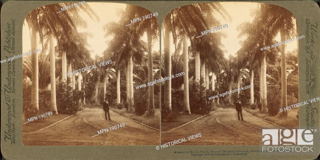 Imagen: Avenue of Royal Palms, Queen's Hospital grounds, Honolulu, Hawaiian Islands. Underwood & Underwood (Publisher). Robert N.