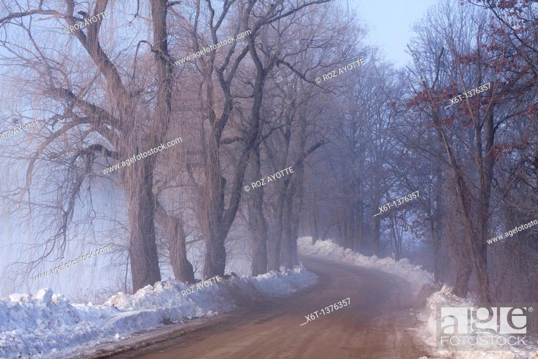 Stock Photo: Farm road on a foggy winter morning with snow and weeping willow trees.