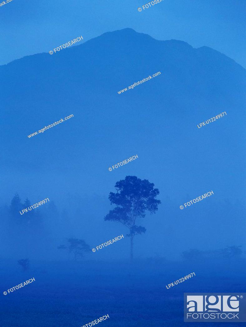Stock Photo: Tree and Mountain, Front View, Toned Image.