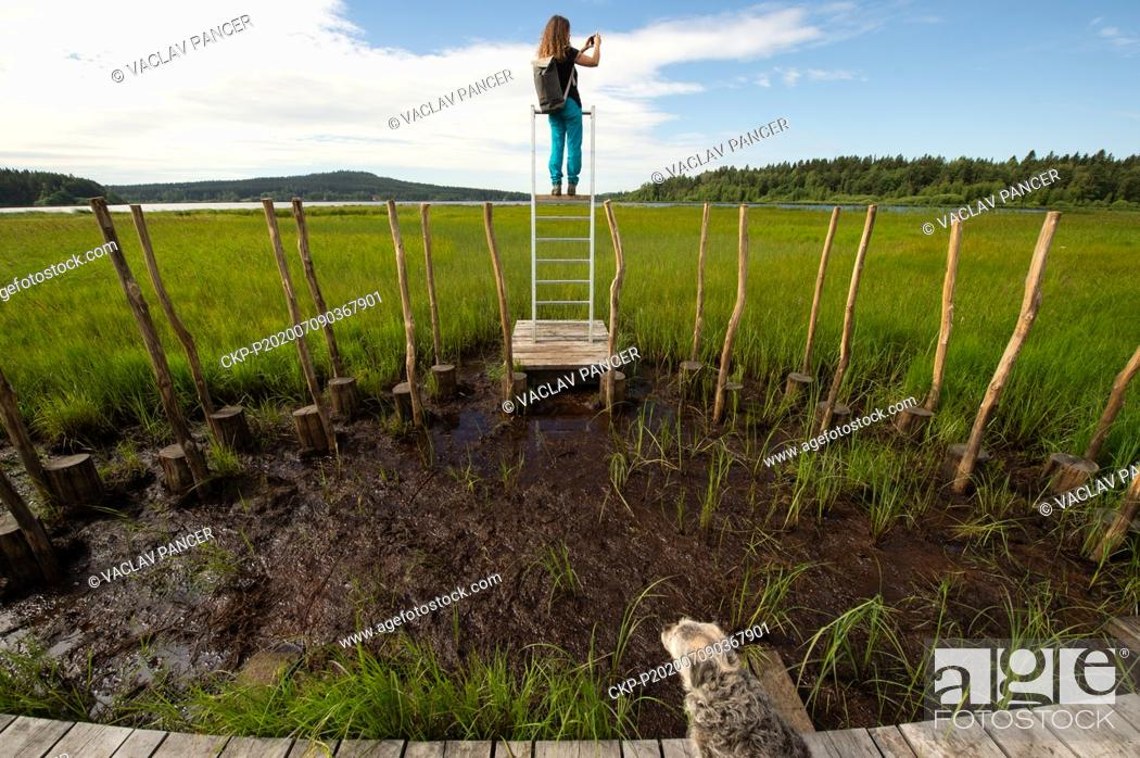 Imagen: A woman photographs a new nature trail, which leads largely through peat bogs and moors around the Olsina pond in the Cesky Krumlov Region, Czech Republic.
