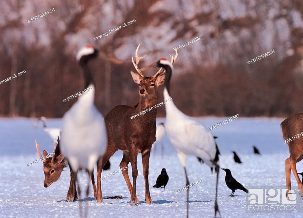 Stock Photo: scenery, animal, nature, deer, bird, film.