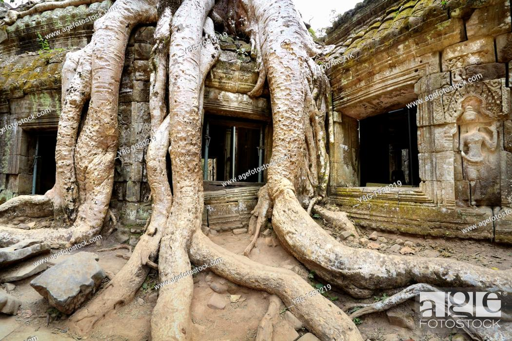 Stock Photo: Angkor - huge roots overgrowing ruins of the Ta Prohm Temple, Angkor Temples Complex, Cambodia, Asia.