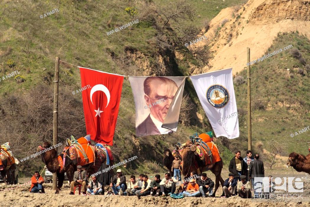 Stock Photo: dromedary, one-humped camel Camelus dromedarius, fighting camels with turkish flag and a banner with Ata Tuerk, Turkey, tuerkische Aegaeis, Kuyucak.