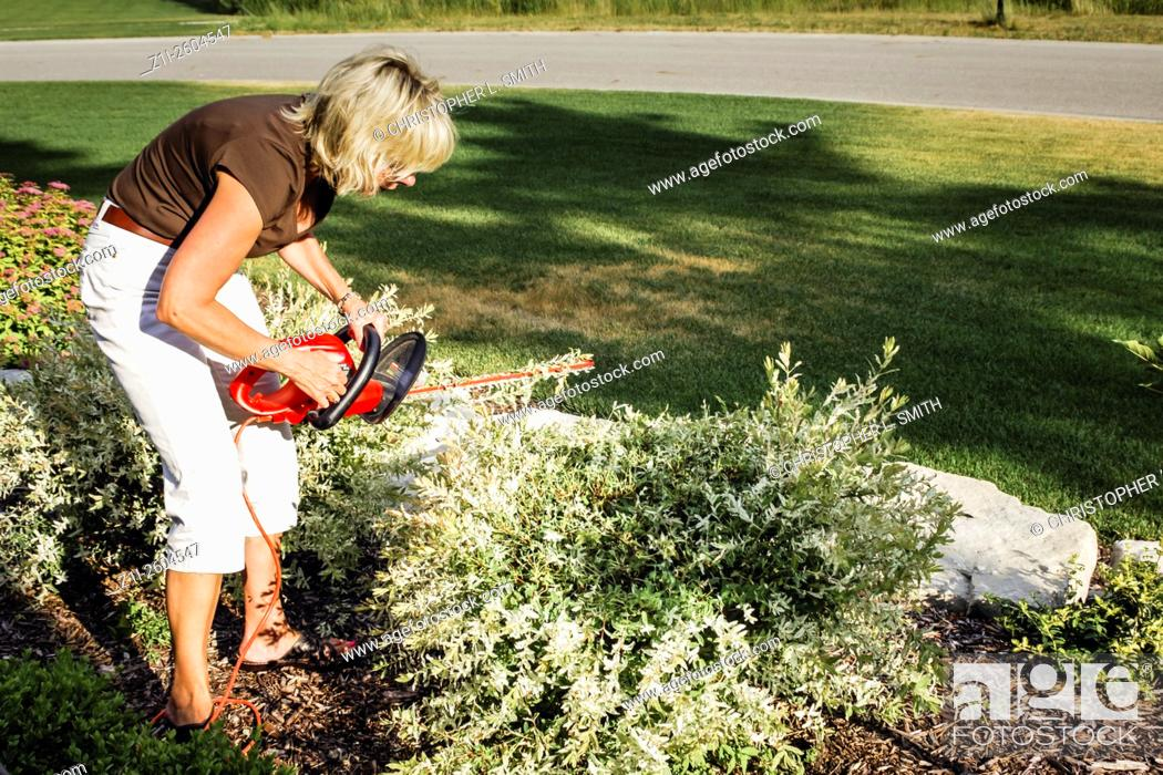 Stock Photo: Woman using an electric hedge trimmer to shape bushes.