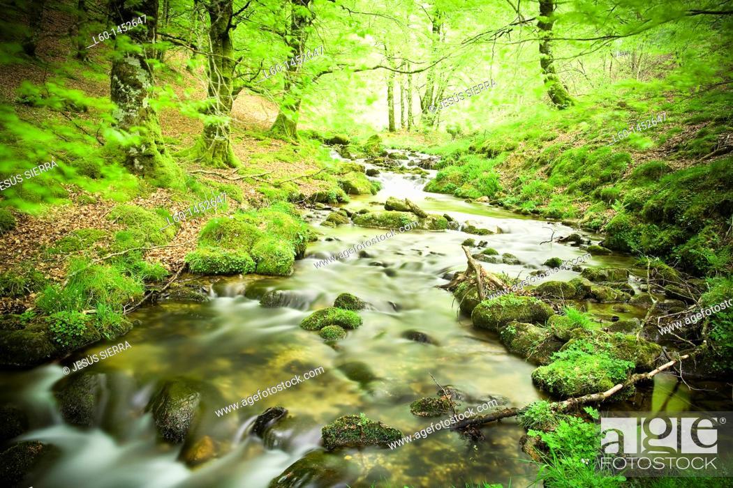 Stock Photo: Irati forest  Navarra, Spain.