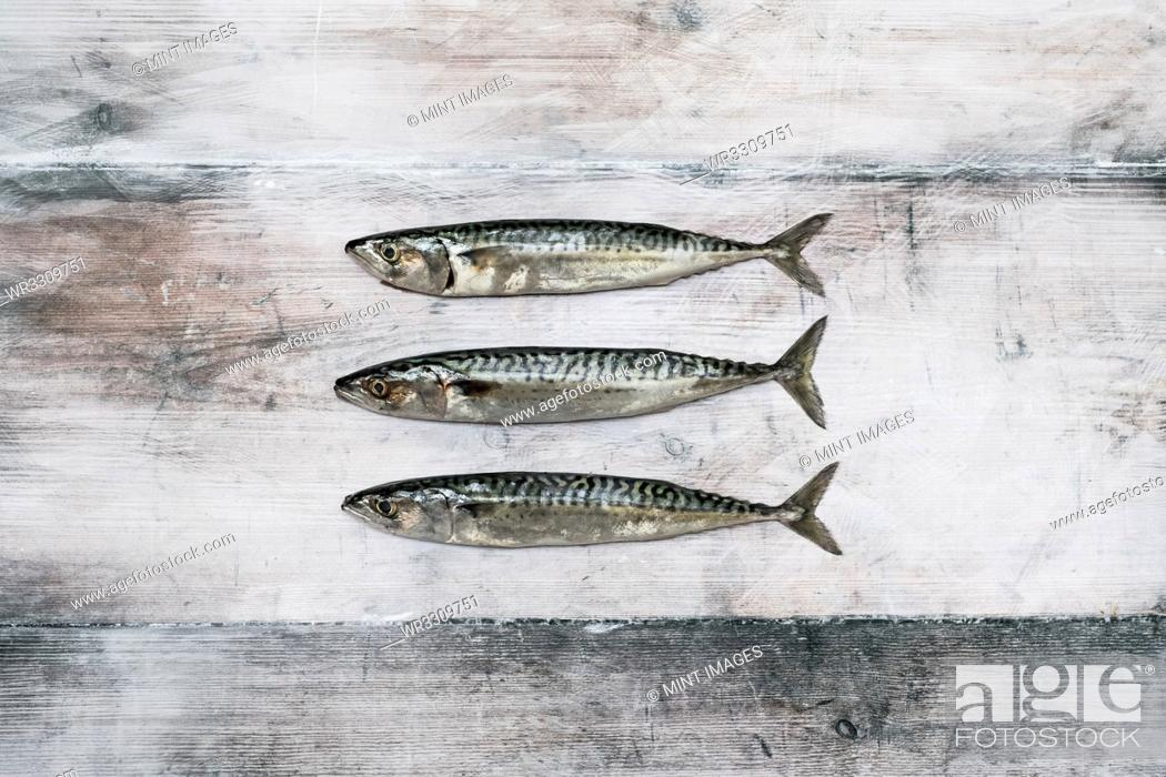 Stock Photo: High angle close up of three fresh mackerel fish.