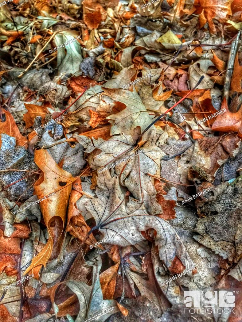 Stock Photo: Dead and decomposing leaves in early winter.