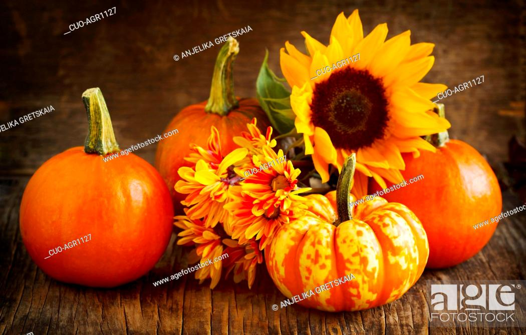 Stock Photo: Autumn pumpkins, asters and sunflower.