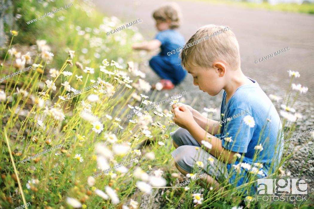 Stock Photo: A little boy picking wild daisies on a hot and humid summer day.
