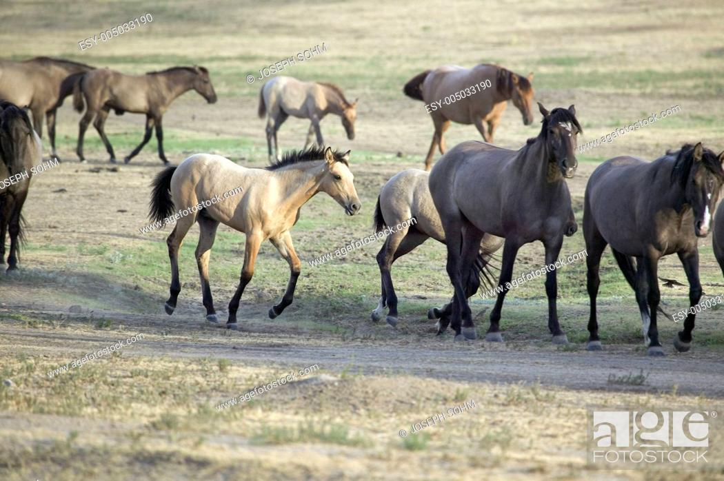 Wild Horses Walking Along Roadside Of Black Hills Wild Horse Sanctuary Stock Photo Picture And Low Budget Royalty Free Image Pic Esy 005033190 Agefotostock