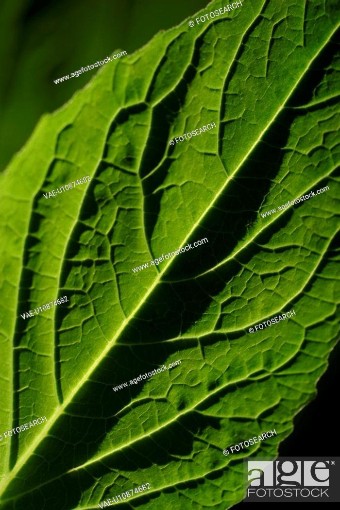 Stock Photo: plant life, flora, environment, grow, life, stalk.