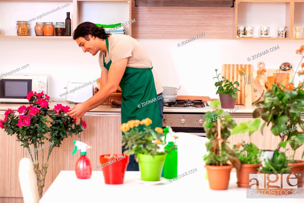 Stock Photo: Young handsome man cultivating flowers at home.
