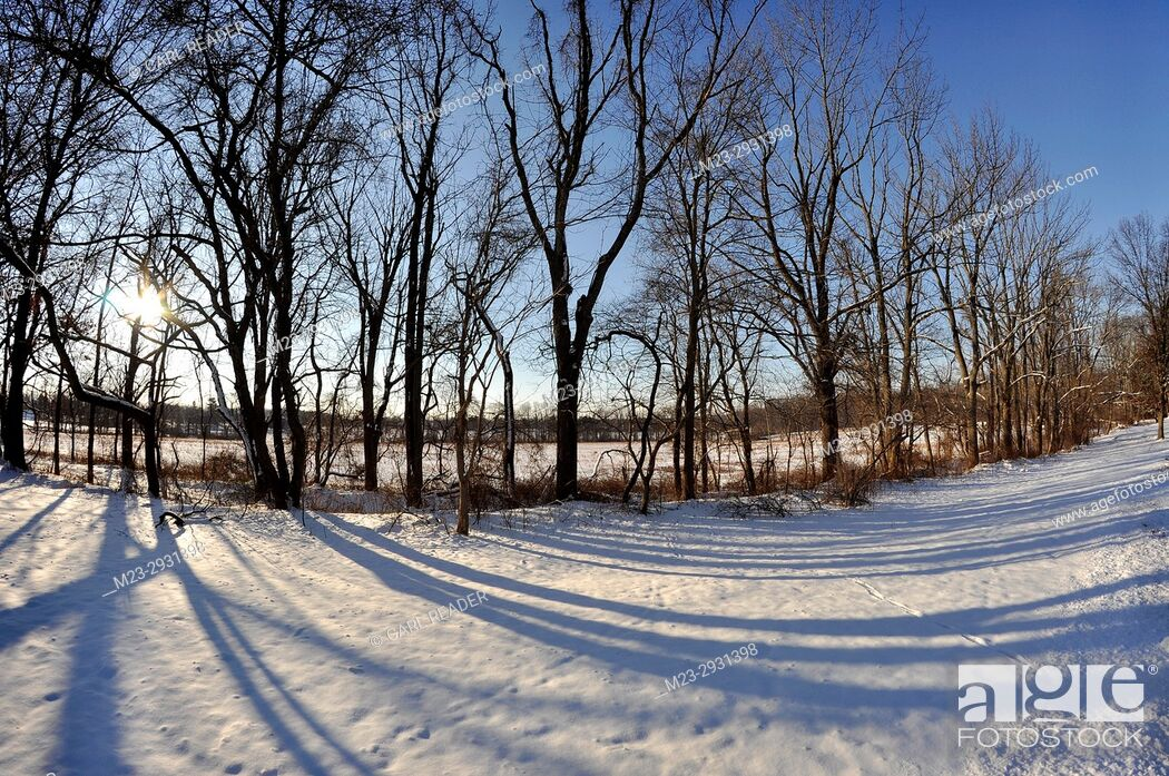 Stock Photo: The winter sun is rising in this fisheye view of a line of trees, Pennsylvania, USA.