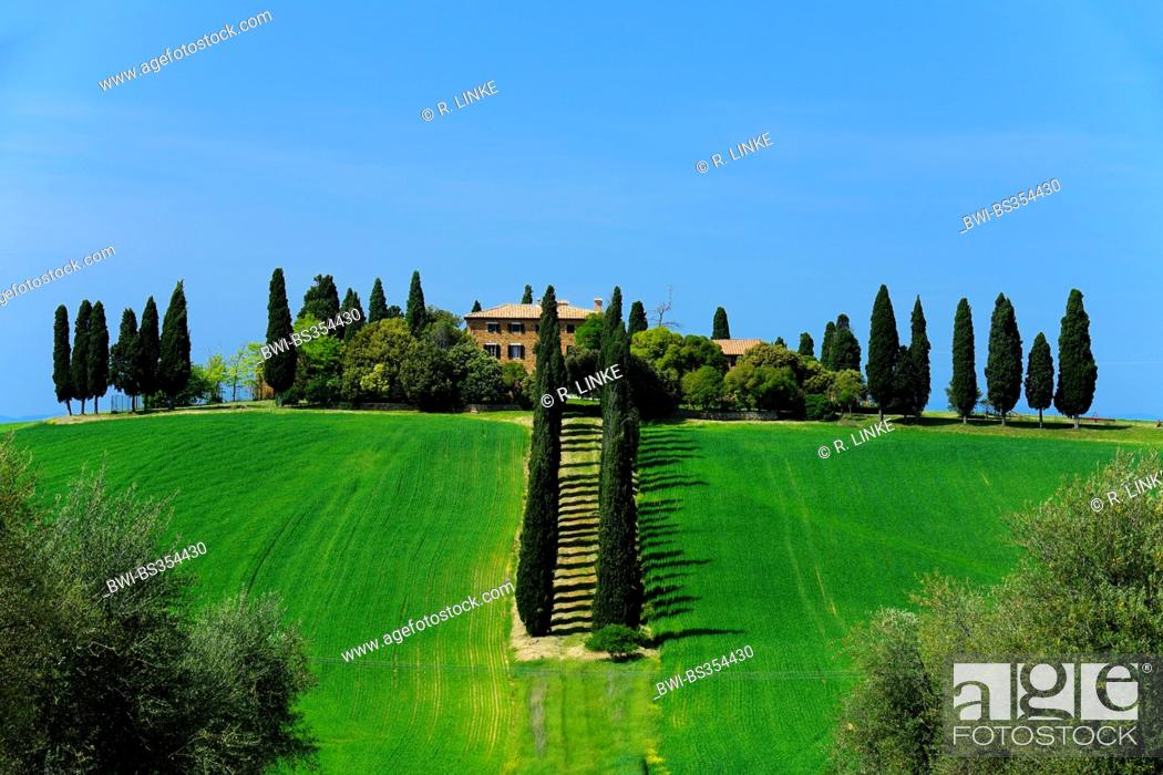 Stock Photo: Farmhouse with Cypress Trees in Spring, San Quirico d' Orcia, Val d' Orcia, Italy, Tuscany.
