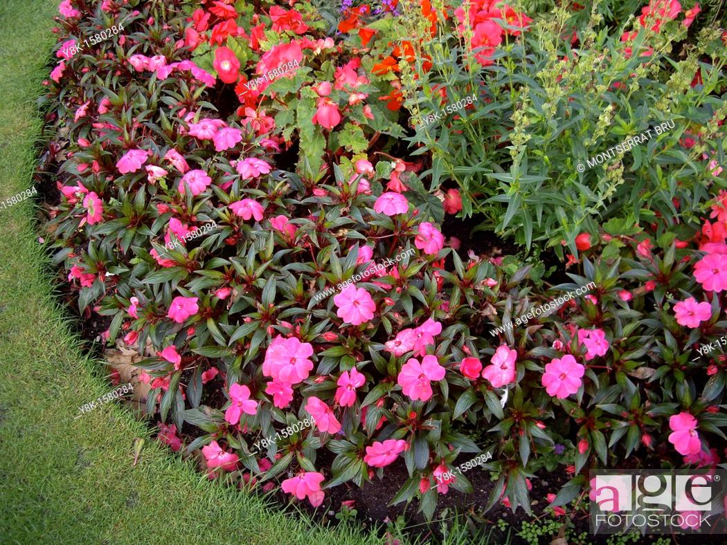 Stock Photo: Round shaped flowerbed.