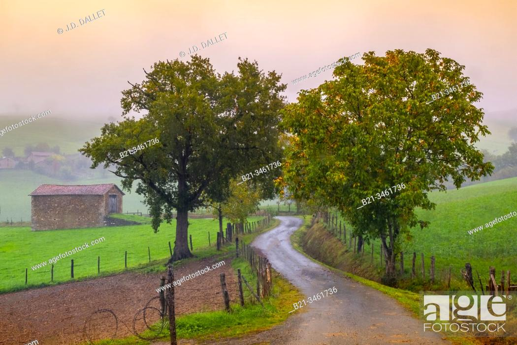 Stock Photo: France, Auvergne, Cantal, autumn near Saint Constant.