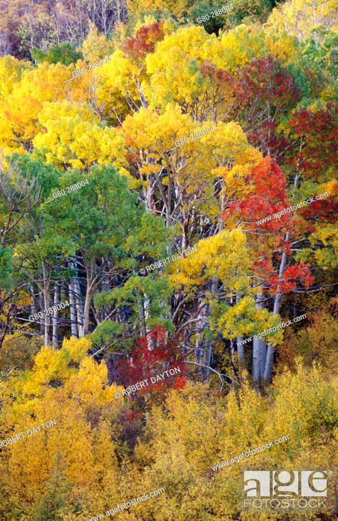 Stock Photo: Fall. Eastern Sierras. California. USA.