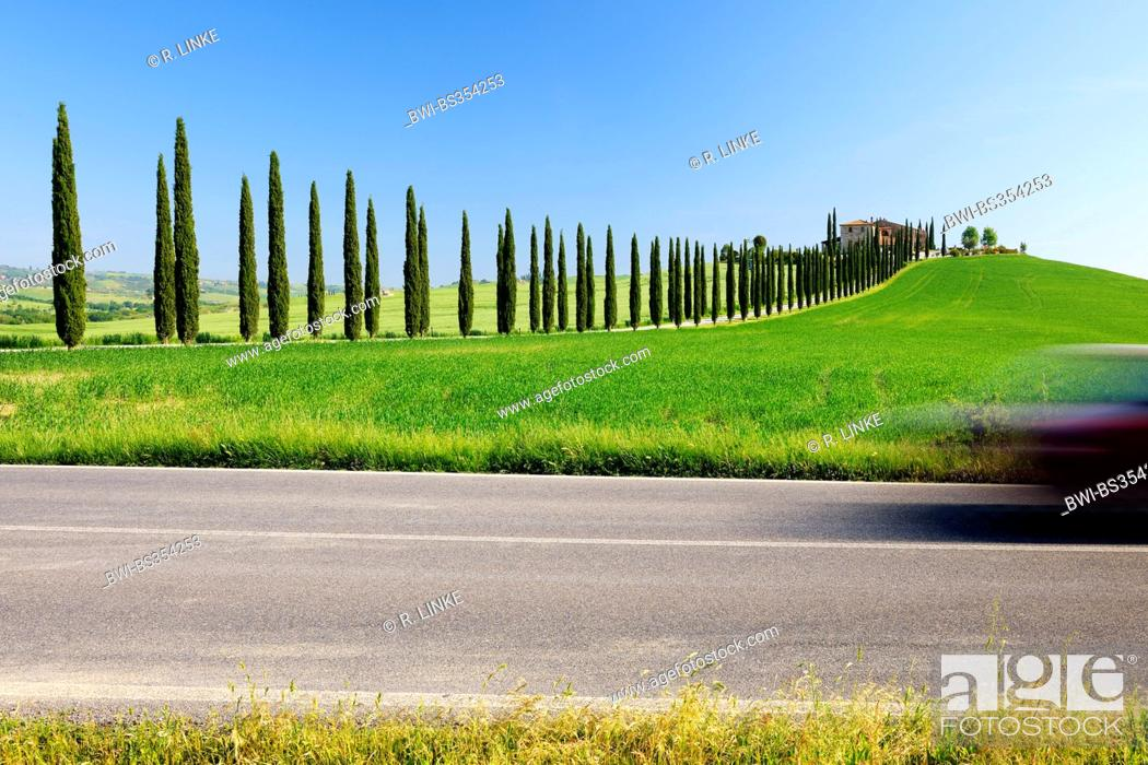 Stock Photo: Italian cypress (Cupressus sempervirens), cypress avenue in spring, Italy, Tuscany, Val d Orcia, San Quirico d Orcia.