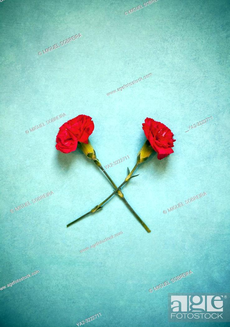 Imagen: Red Carnations Crossed.