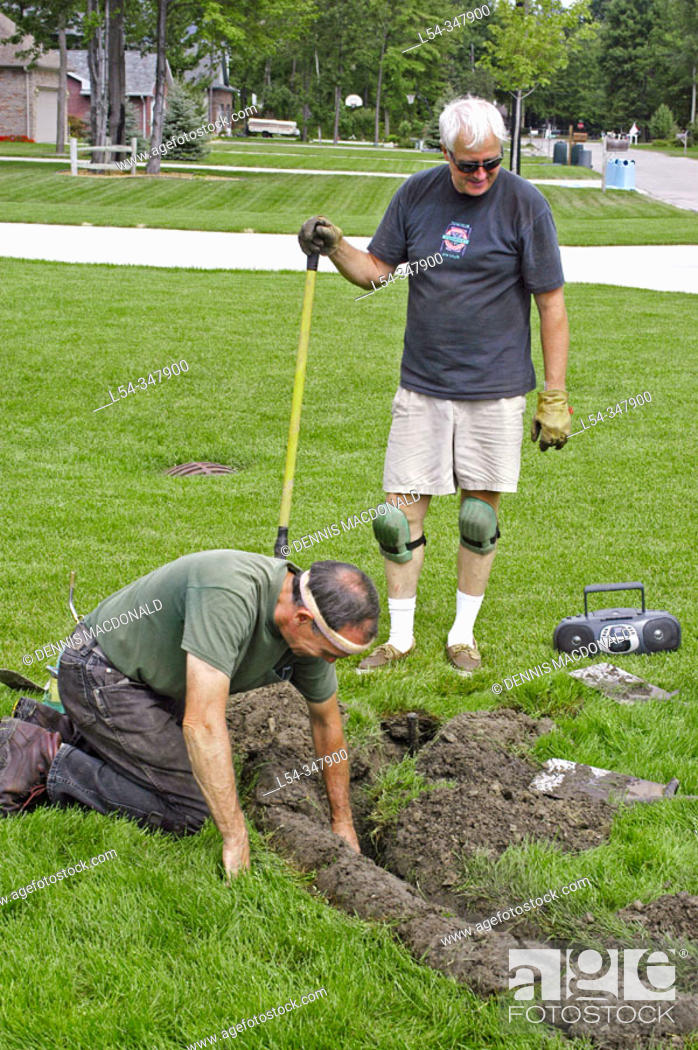 Stock Photo: Two retired adult men working in second career install lawn irrigation systems.