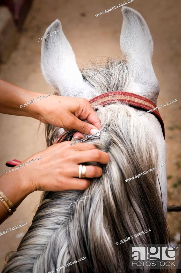 Stock Photo: Woman's hand braiding a horse's mane.