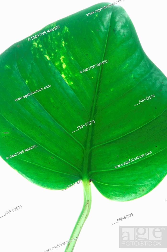 Stock Photo: Leaf, close up.