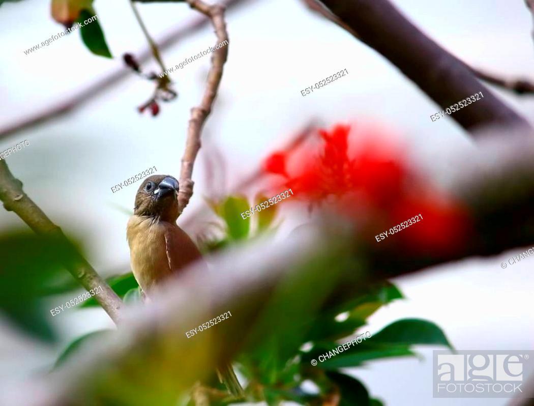 Stock Photo: small bird on tree in fresh nature.