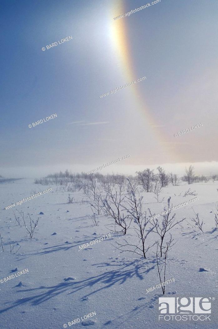 Stock Photo: Norway, Finnmark, Kautokeine, winter-landscape, counter-sun, Scandinavia, landscape, snowed in, snow, deep powder snow, frost, cold, bushes, snow-covered.