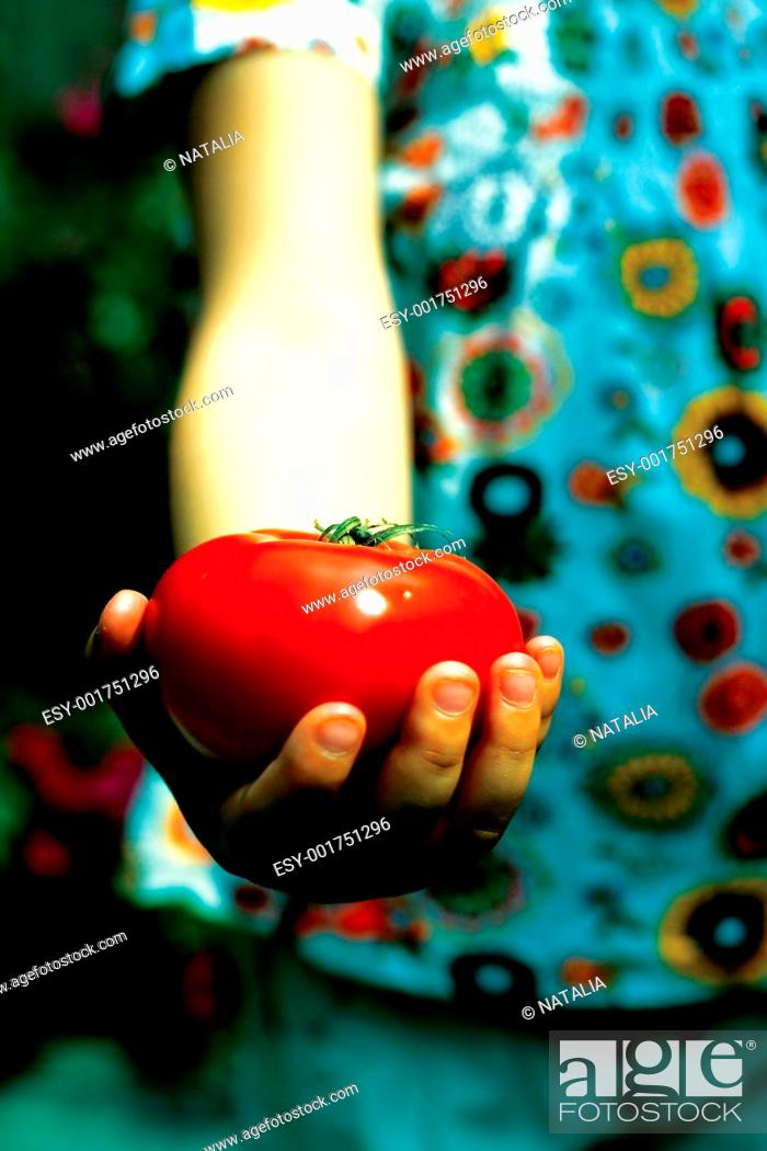 Stock Photo: hand of girl holding tomato.