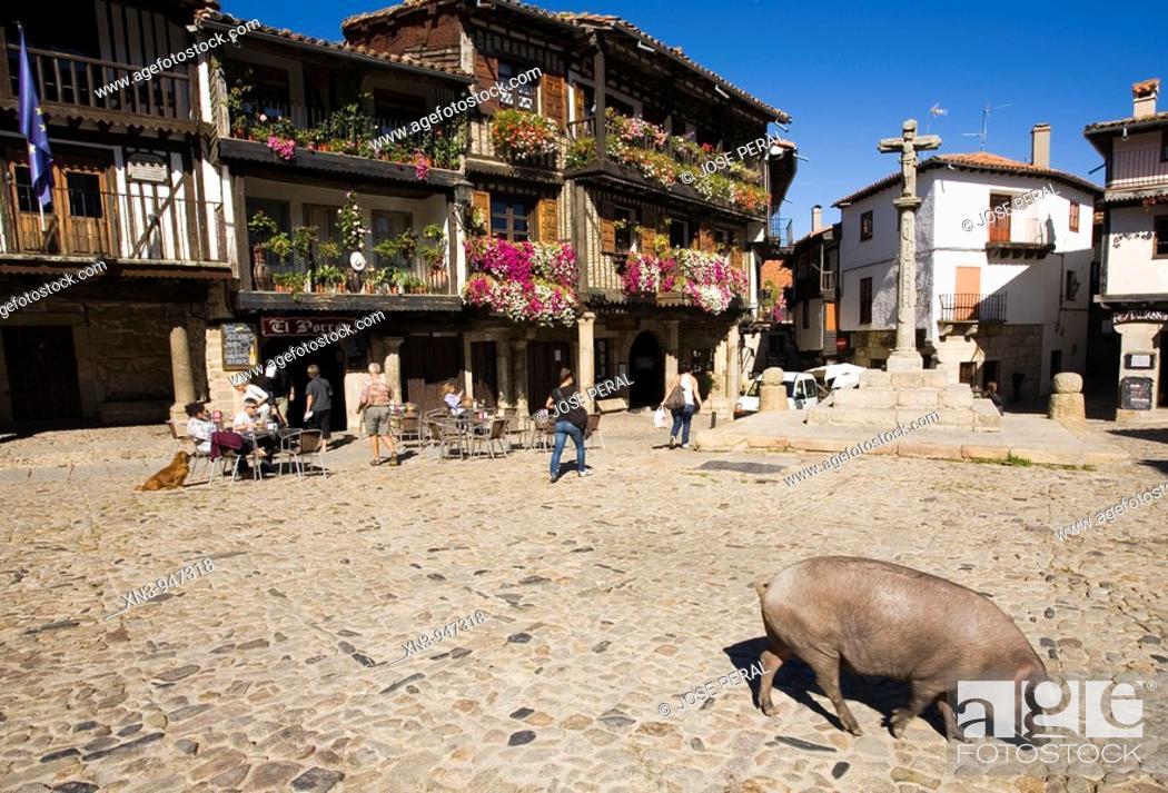 Stock Photo: Iberian pig in La Alberca. Salamanca-prov. Spain.