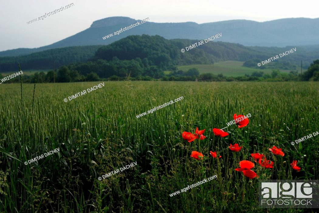 Stock Photo: Scenic View Of Grassy Field Against Sky.
