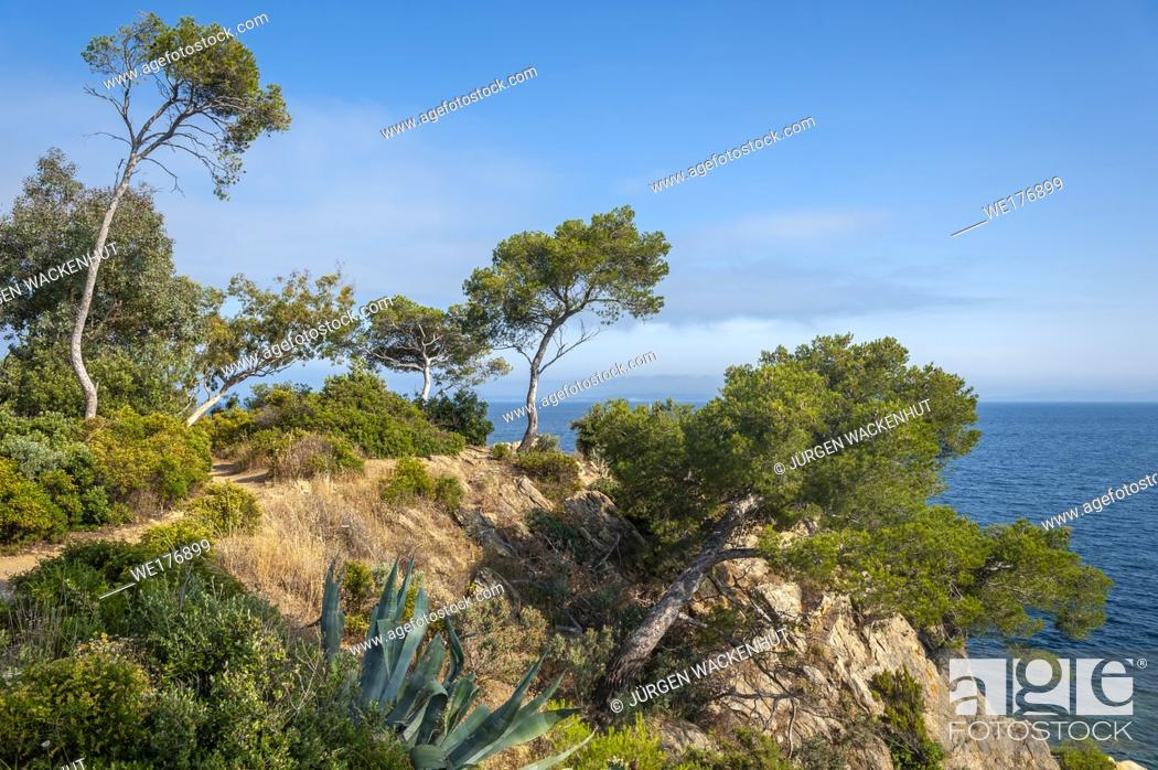 Stock Photo: Landscape on Pointe du Layet, Le Lavandou, Var, Provence-Alpes-Cote d`Azur, France, Europe.
