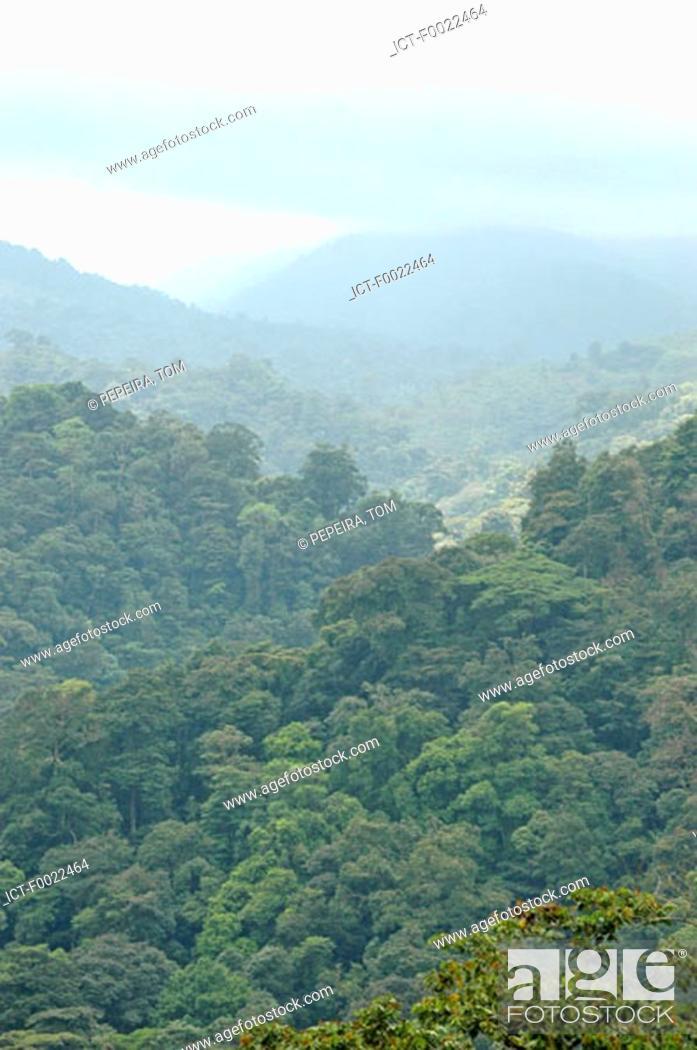 Stock Photo: Costa Rica, rainforest.