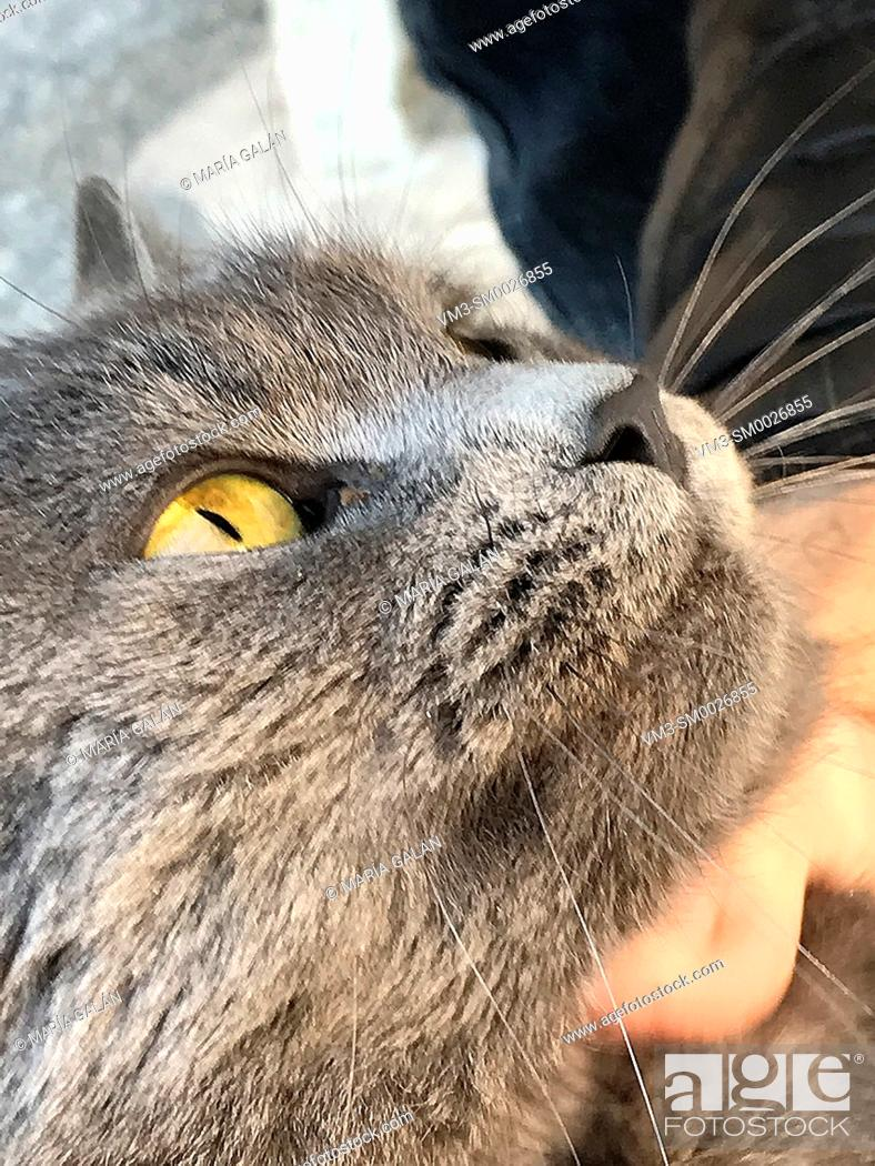 Imagen: Grey cat face. Close view.