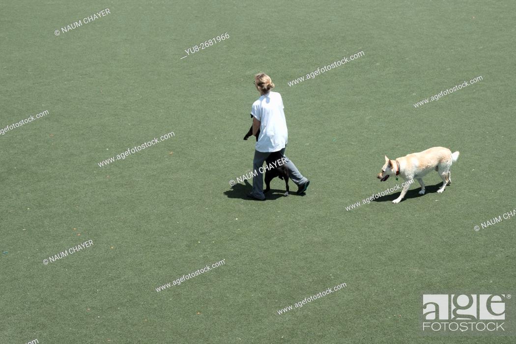 Stock Photo: A woman training her two dogs, Columbus square dog park, Philadelphia, Pennsylvania, USA.