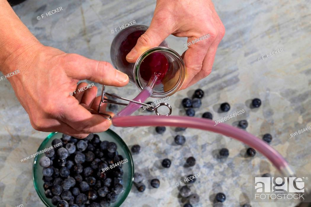 Stock Photo: blackthorn, sloe (Prunus spinosa), juice of fruits are juiced with a juice separator.