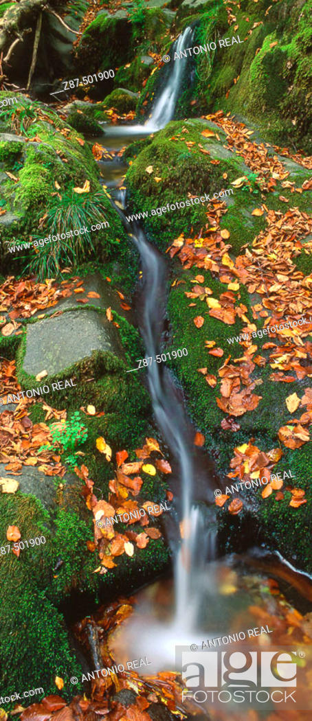 Stock Photo: Odia beechwood in Valle de Anue, Pyrenees Mountains. Navarra, Spain.