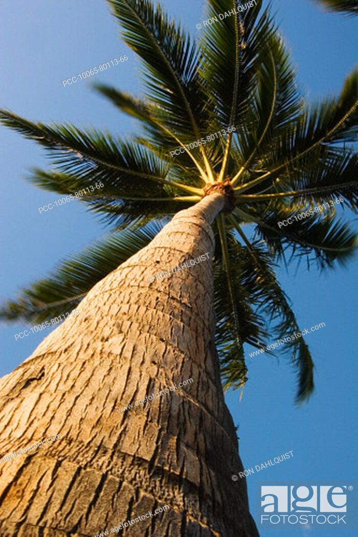 Stock Photo: View from below of palm tree in bright blue sky, detail of trunk.