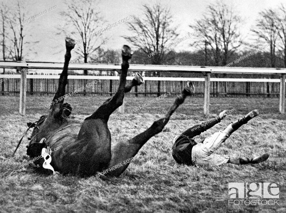 Stock Photo: Gatwick, England: February 13, 1937.Both horse and rider find themselves in similar positions after a spill in the Brook Steeplechase.