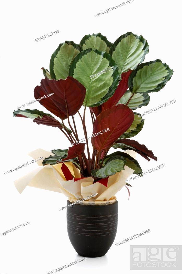 Stock Photo: Ornamental Plants.