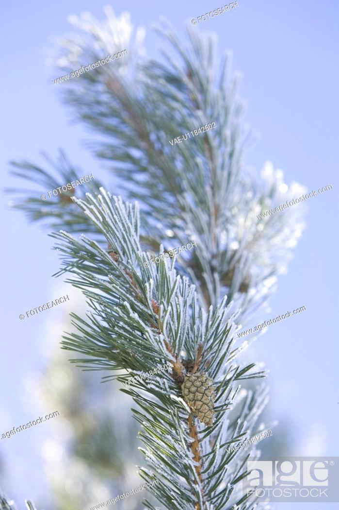 Stock Photo: Branch, Close-Up, Day, Focus On Foreground, Fruit.