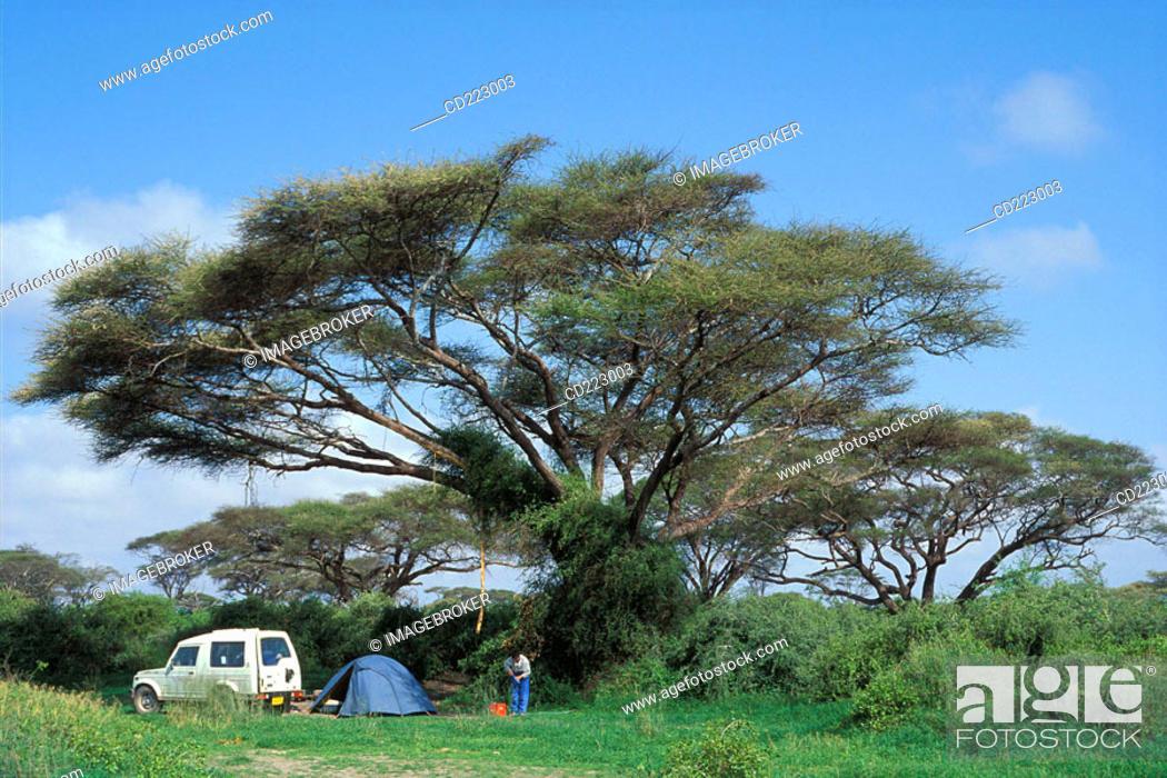 Stock Photo: Camping under a acacia tree in the Amboseli National Park, Kenya.