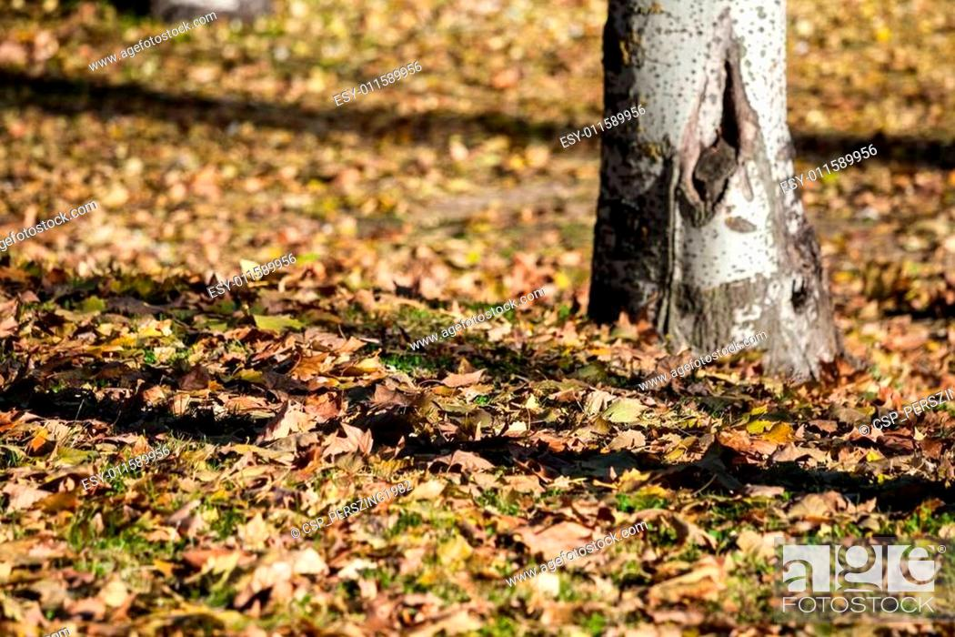 Stock Photo: City park in autumn, getafe, madrid.
