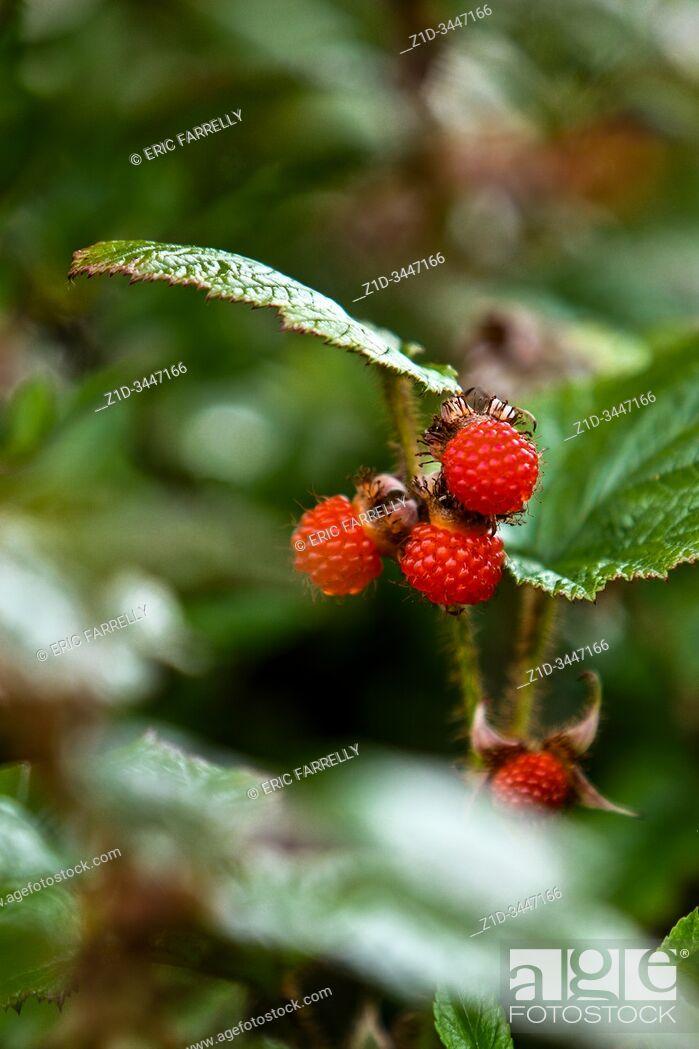 Imagen: summer brambles & fruit.