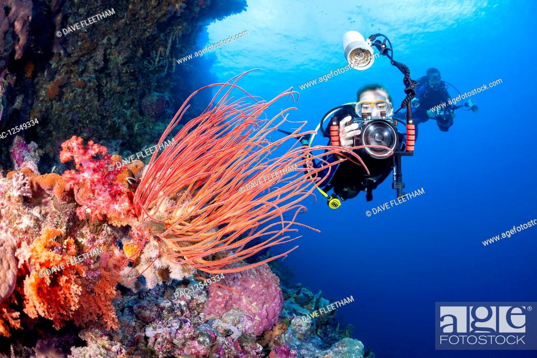 Stock Photo: A photographer lines up with a SLR in a housing with a macro lens to shoot soft coral detail; Indonesia.