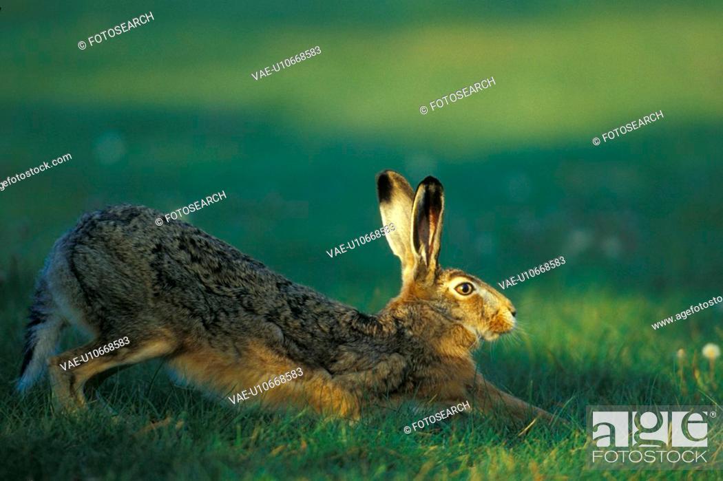 Stock Photo: bunny, Christian, animals.