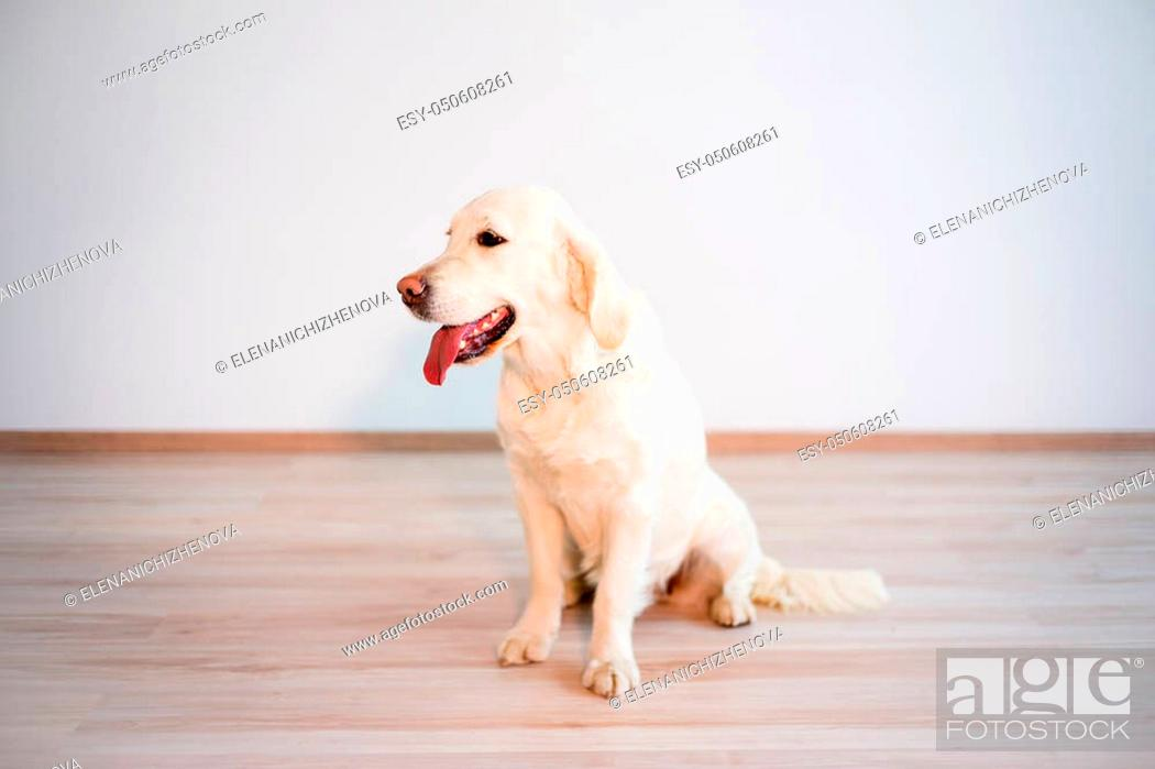 Stock Photo: Portrait of a happy dog in an apartment.