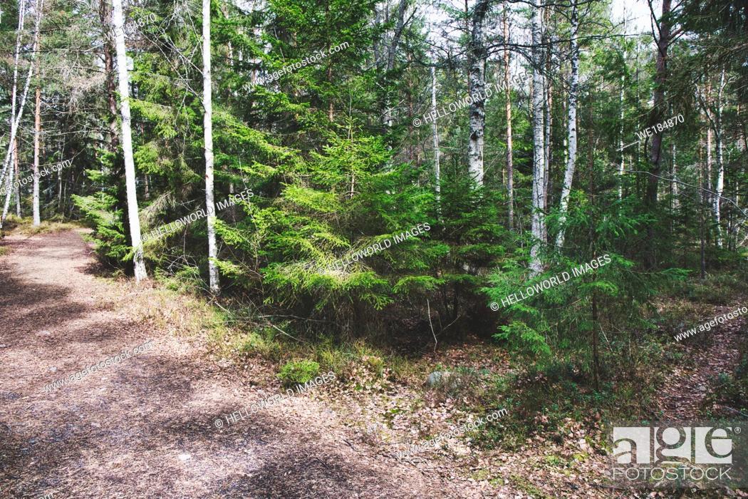 Imagen: Bjorno Nature Reserve, Sweden.