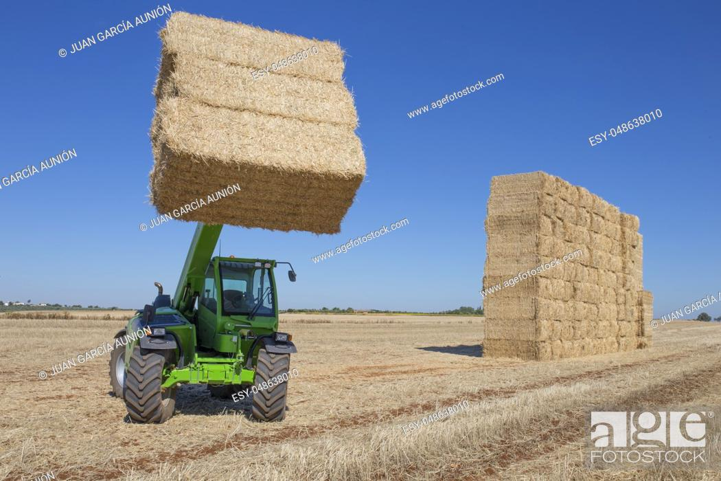Stock Photo: Telescopic handler gathering and stacking bales. Telescopic machinery for agricultural sector.
